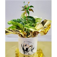 5_in_Dog_Planter_with_Pinwheel_-_19.99