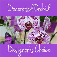 Decorated_Orchid_2019