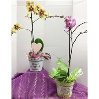 orchids_for_mom